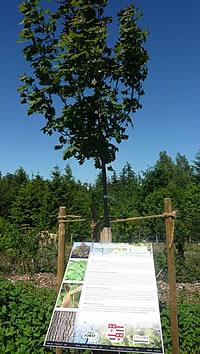 """Einrichtung der neuen Schilder für die """"Baum des Jahres Allee"""""""