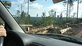Windwurf im Schwarzwald