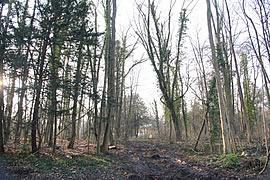 Sicherheitsfällung im Kleinheubacher Schlosspark