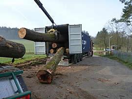 Buchen aus Mönchberg - Holztransport über Container nach China durch die Interforst GmbH