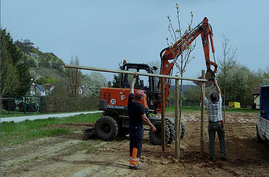 Baum-des-Jahres-Allee in Großheubach