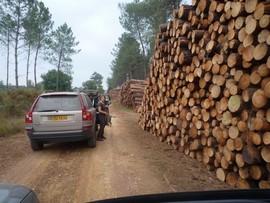 Orkan Klaus - Holzlagerung in Frankreich