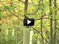 Tubex Video