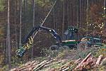 Bild - Holzeinschlag maschinell mit Harvester