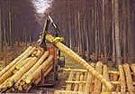 Bild - Holztransporte