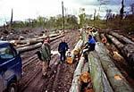 Bild - Holzübernahmeservice