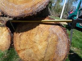 Orkan Klaus - auch große Bäume hatten keine Chance.