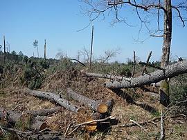Schäden nach dem Orkan Klaus im südwesten von Frankreich