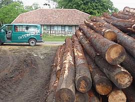 Holzlagerung durch die Interforst GmbH im Sturmgebiet nach Orkan Klaus