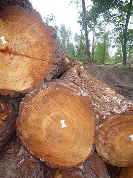 Holzlagerung nach Orkan Klaus