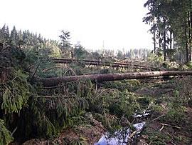 Orkanschaden nach Kyrill