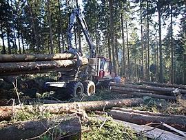 Rückezug mit Klemmbank bei der Langholzrückung