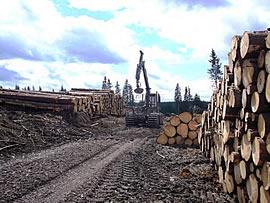Bild - Holzstämme