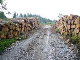Bild - Holzlagerung