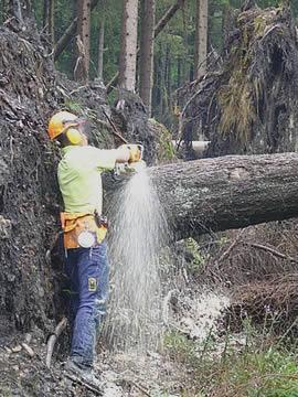 Bild - Forstarbeiter mit Motorsäge