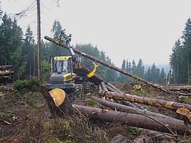 Bild - Forstmaschine der Fa. Ponsse