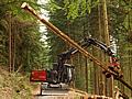 Informationen zur Kommunalwaldbewirtschaftung