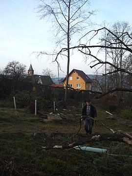 Neubepflanzung der ProForst-Fläche am Engelberg in Großheubach durch die Interforst GmbH